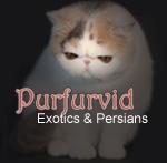 Purfurvid Exotic & Persian Cats